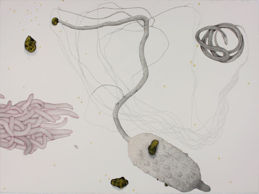 'My drawings and sculptures find inspiration in collected objects from the natural environment, while also revealing the darker, uncanny world of the psyche.' Lia McKnight, Aurum, 2018, ink, graphite and pencil on paper, 57 x 76 cm.