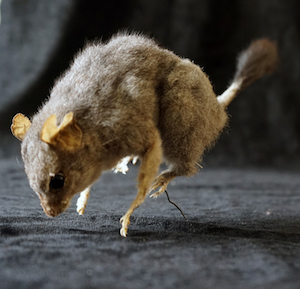 A small furry taxidermied mammal,