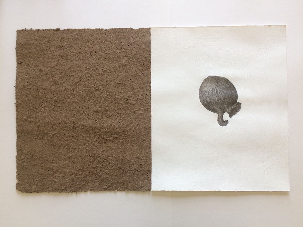 Ric Spencer's 'Gumnut Study' contrasts a piece of paper made out of gumnuts with a hand drawn black and white sketch of a seed, The paper on the left is brown and rough looking.
